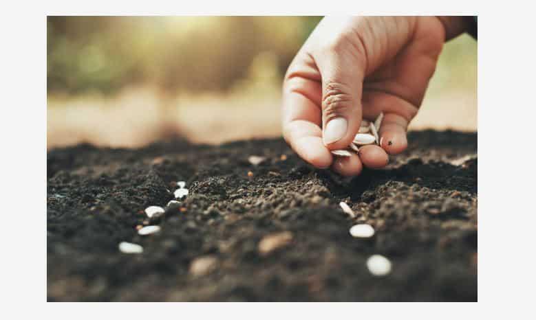 Jardin potager, cultiver à partir de semences ou de plants