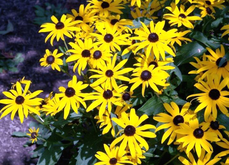 Les pires fleurs pour les personnes allergiques